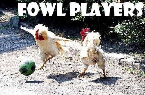 chickenfowlplyr