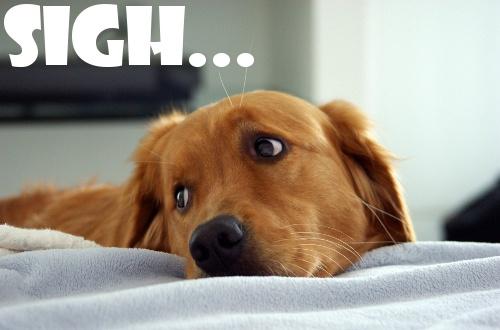 2013 top 10 games didn't play Sad-Puppy